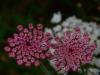 44 Blumen