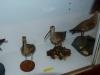 25 Zarapito Trinador im  Museum in Santa Cruz