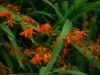 bluemis-in-orange